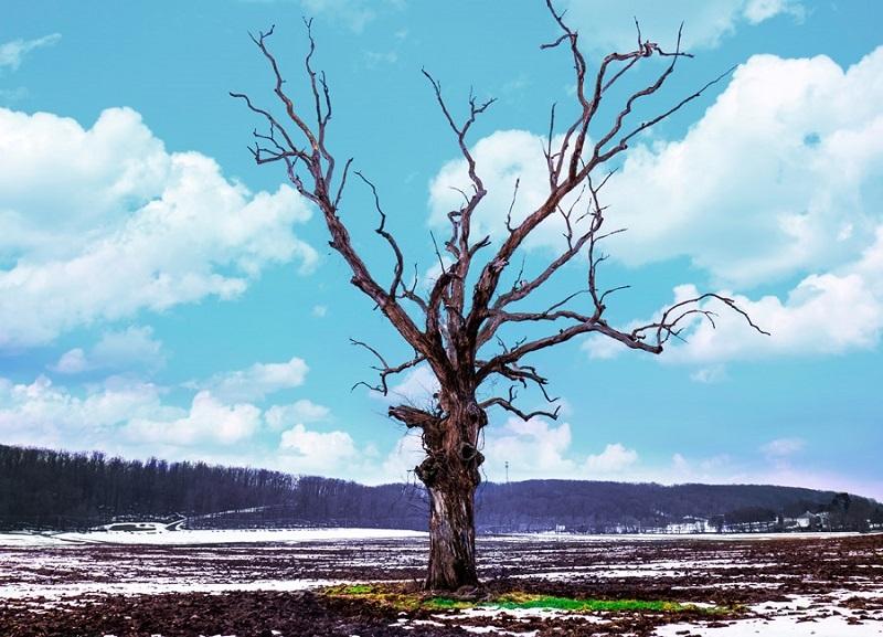 フリー画像冬のはだか木