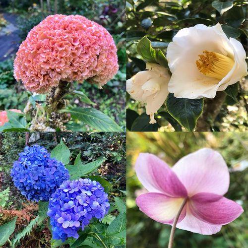 11,4植花夢ーお花