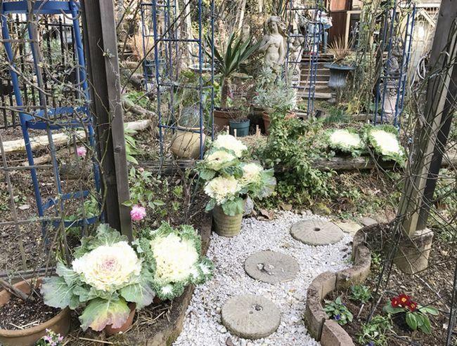 1,4ビーナス花壇-2