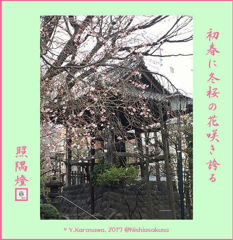 170107冬桜