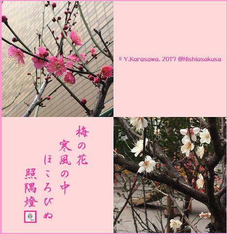 170119梅の花