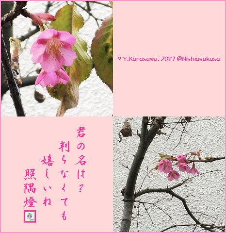 170213何桜?