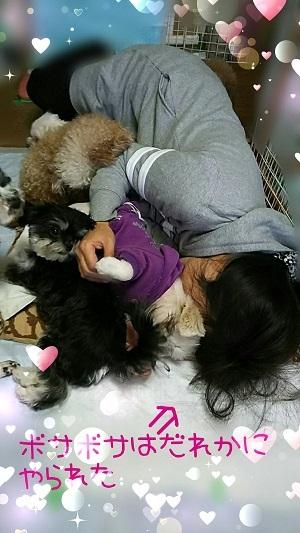 犬まみれ0127 (3)