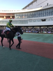 20161203 サトノノブレス&シュミノーJ/金鯱賞^^)