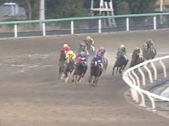 20170110 船橋12R 七草特別 B2 マイネルグルマン 03