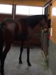20170207 発情周期を試情(あて馬)と直検で見つける^^;