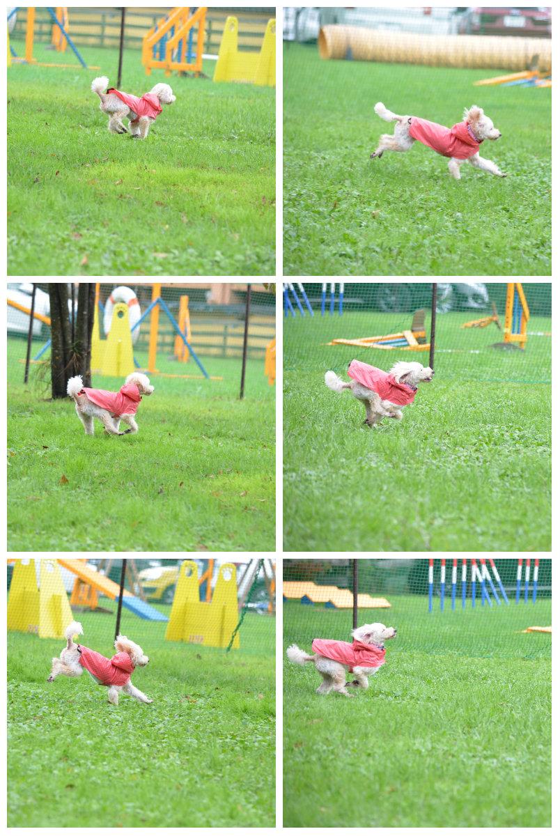 collage1009-2.jpg