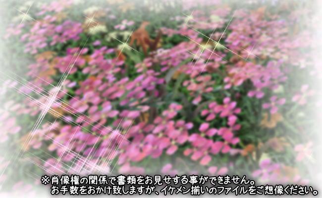 ぴぃさん13話A2