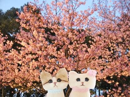 河津桜が咲いていたニャ