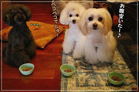 白黒3姉妹も朝ご飯♪