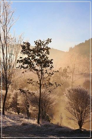 朝起きたら、霜で真っ白~!