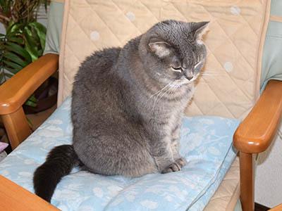 占いミーコ19901