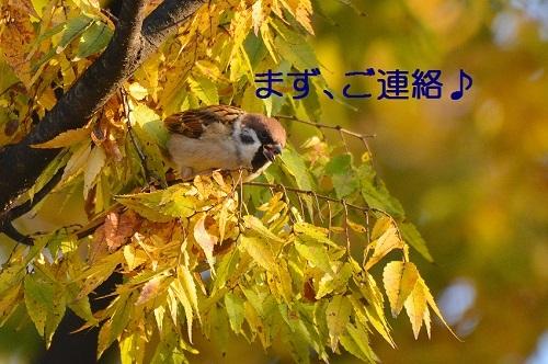 010_20161204235013d18.jpg