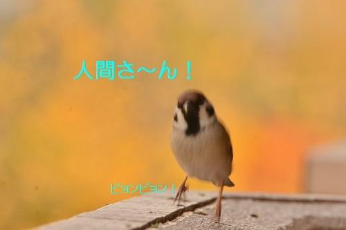010_201612051945044ca.jpg