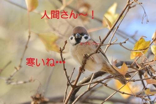 010_201612281955543fa.jpg