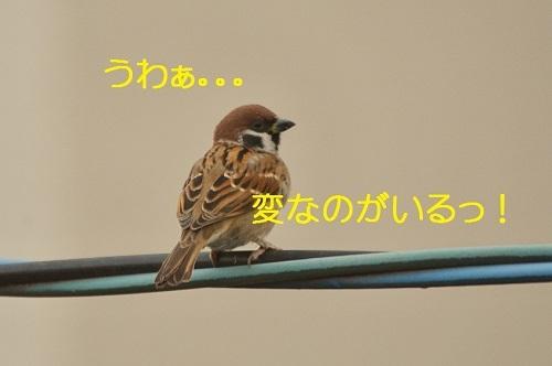 010_20170103191309cb5.jpg
