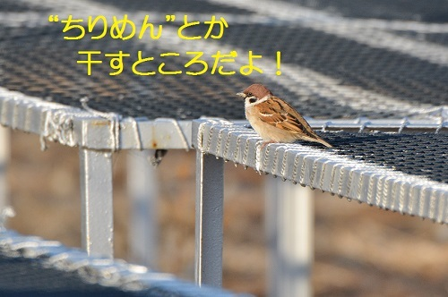 010_2017010420064853e.jpg