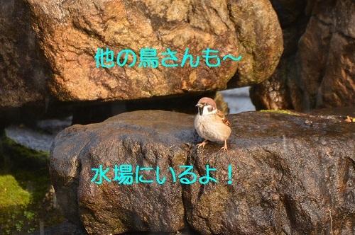 010_2017012019092489b.jpg