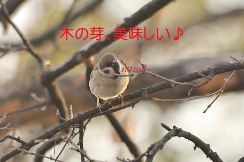 010_201701222236142fa.jpg