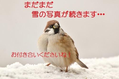 010_20170127211545d75.jpg