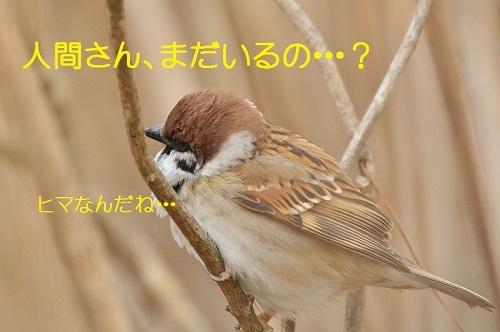 010_201702141858503fc.jpg