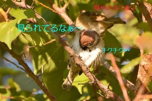 020_201611122211417e9.jpg