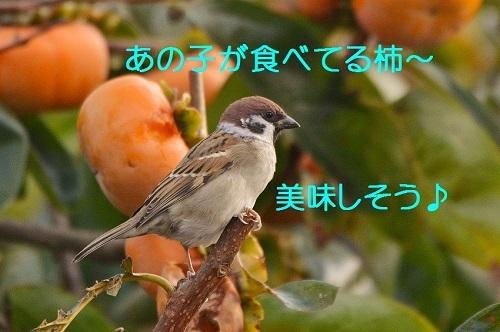020_2016112622373670a.jpg