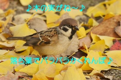 020_20161211225138cc3.jpg