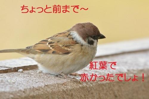 020_201612182105146c7.jpg