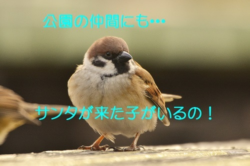 020_20161225192626c6c.jpg