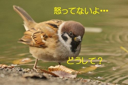 020_201612261939272c4.jpg