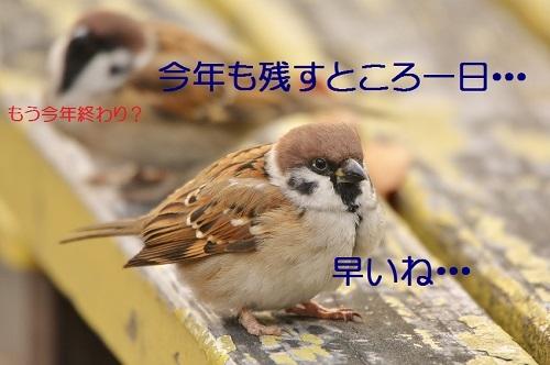 020_20161230205734617.jpg