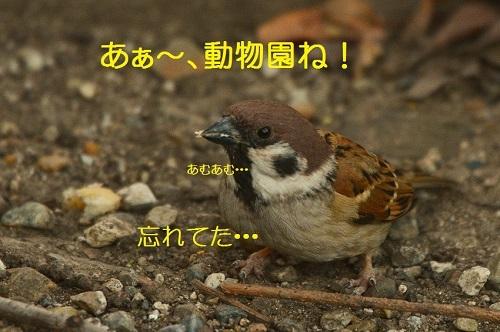 030_20161119194634374.jpg