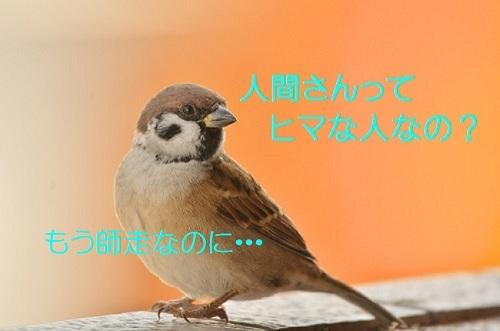 030_201611301759384d3.jpg