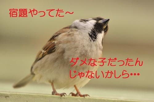 030_2016120323353584c.jpg