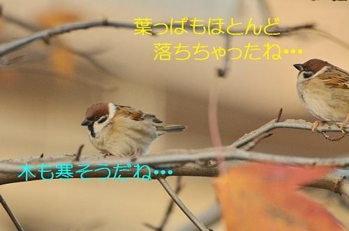 030_201612061805043c3.jpg