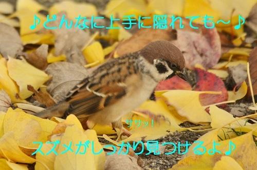 030_201612112251395df.jpg