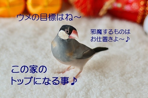 030_201701022014253fa.jpg