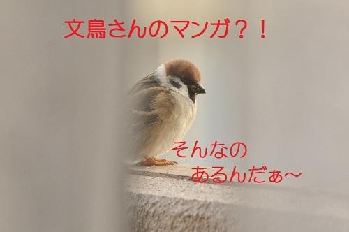 030_20170130185614353.jpg
