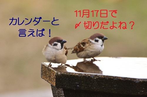 040_201611162021248f6.jpg