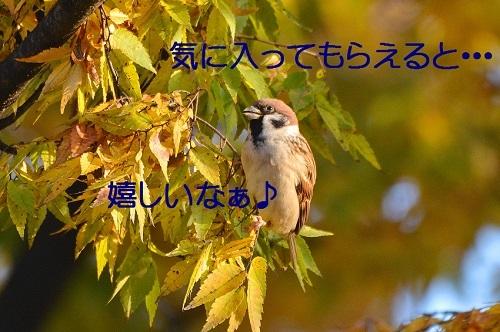 040_201612042350178f1.jpg