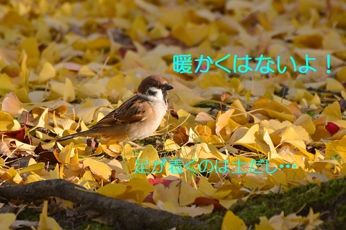 040_20161208192333d11.jpg