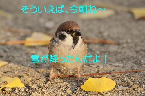 040_20161216200834714.jpg