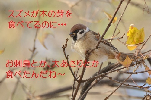 040_2016122819555854a.jpg