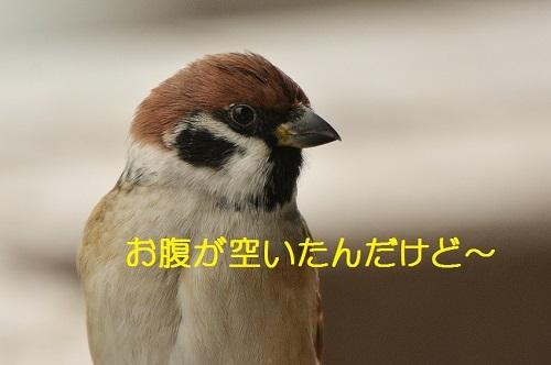 040_20170111182625a21.jpg