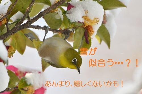 040_20170127211549b68.jpg