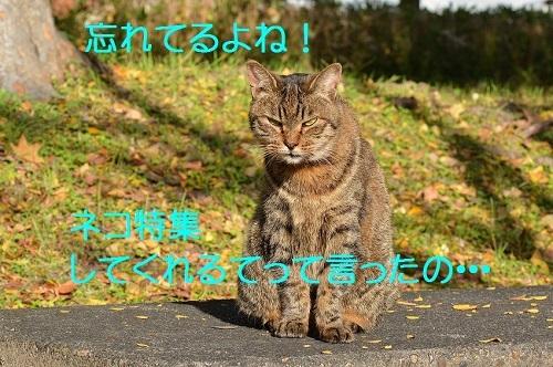 050_201612182105180da.jpg
