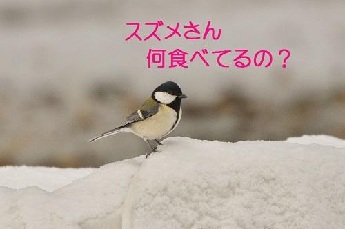 050_20170202182213cc4.jpg