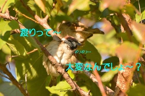 060_2016111222145308a.jpg