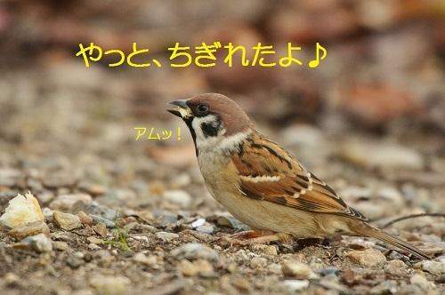 060_201611132103573f1.jpg